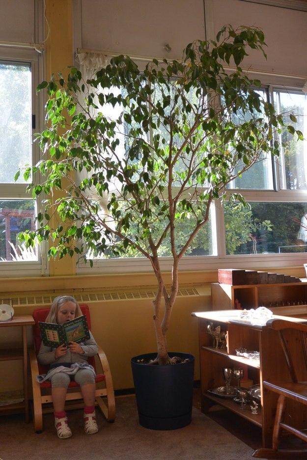 CS WkSept22 2014 tree